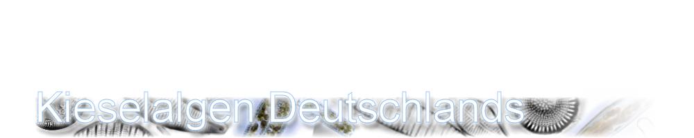 Diatomeen Banner